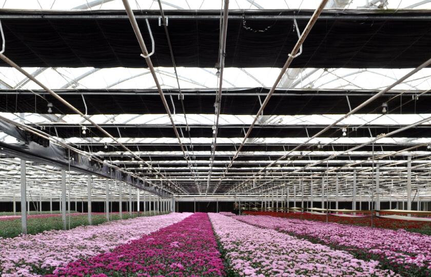 servizio impianto coltura in serra